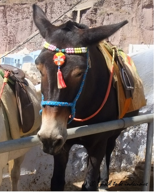 patient donkey waiting for a rider