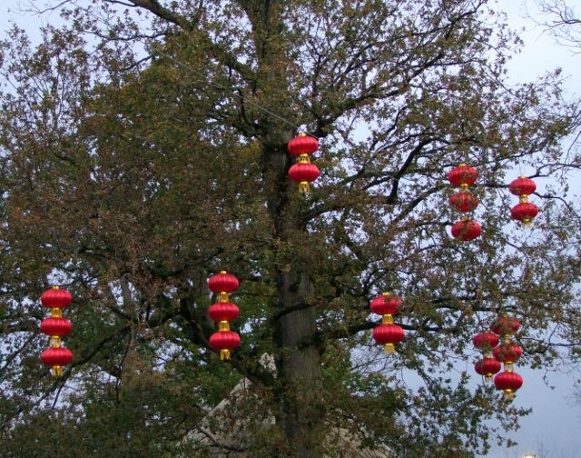 red Chinese lanterns in tree