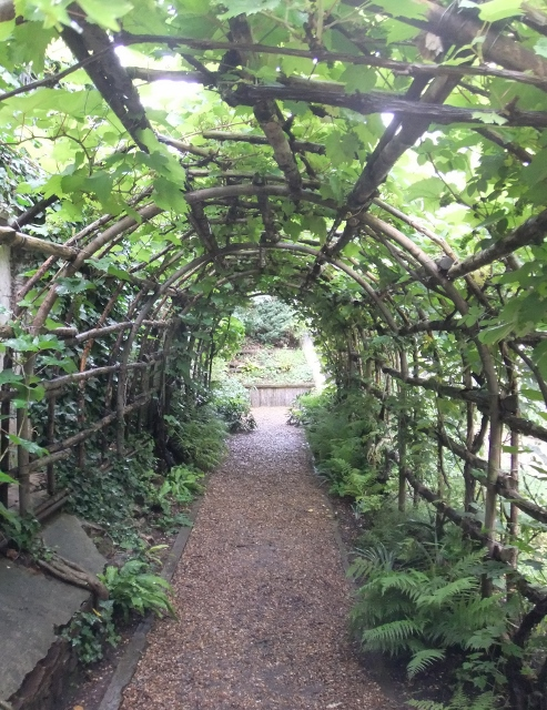tunnel arbour with grape vines